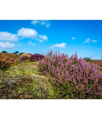 Roydon Common Heather Canvas 38mm Frame
