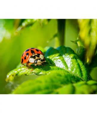 Resting Ladybird Greetings Card
