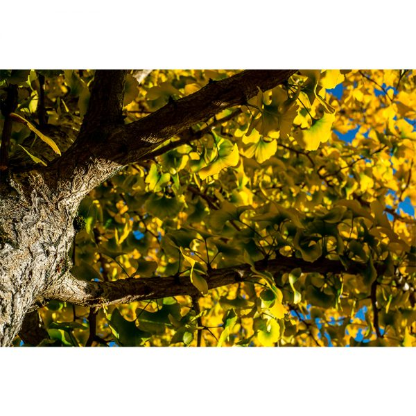 From Green To Yellow Autumn Transformation
