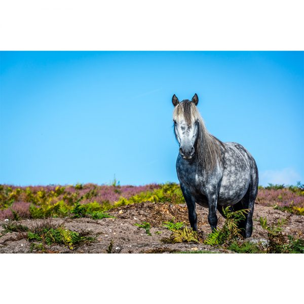 Roydon Common Horse Greetings Card