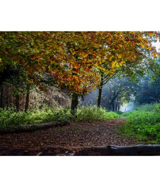 Thetford Forest Autumn Colours  Greetings Card
