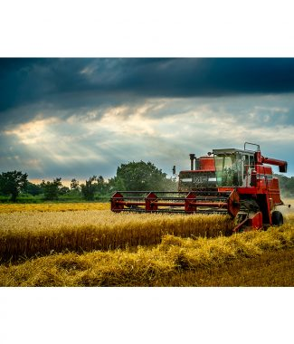 Oat Harvesting Massey Ferguson 865 Combine Harvester  Greetings Card