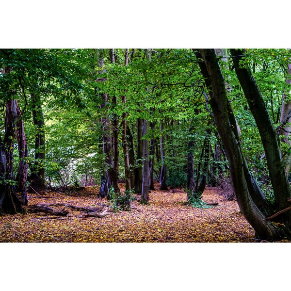 Wayland Wood Autumn Colours Poster