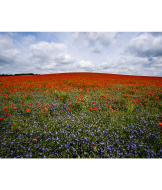 Duxford Poppy Field Landscape Canvas 38mm Frame