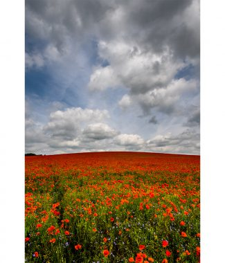 Duxford Poppy Field Portrait Greetings Card