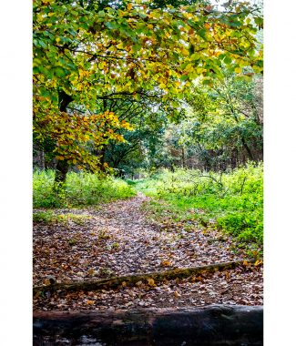 Thetford Forest Path Autumn Colours Greetings Card