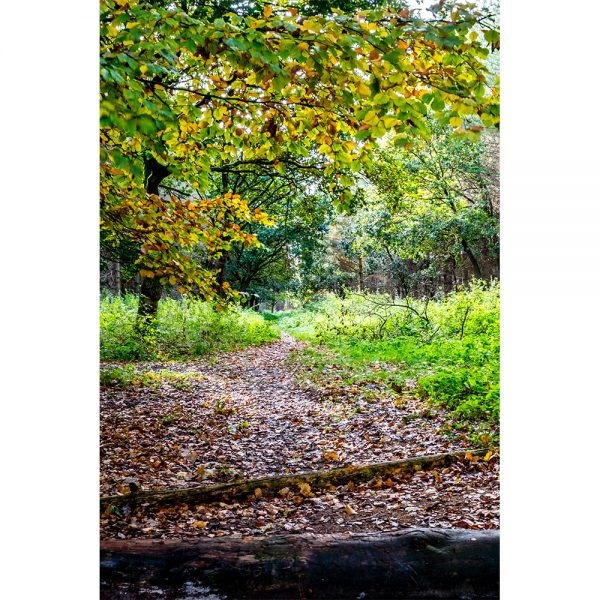 Thetford Forest Path Autumn Colours Poster